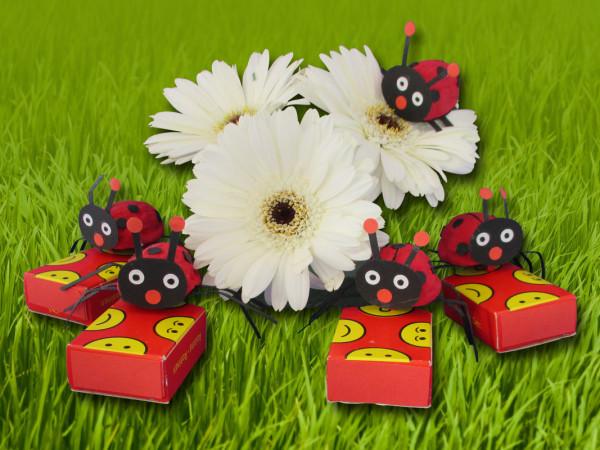Lieveheersbeestje-groep